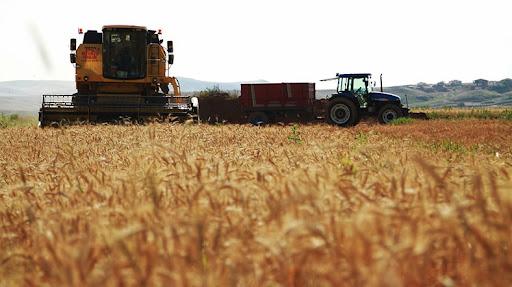 İklimsel 2 faktör buğday fiyatlarını yükseltti